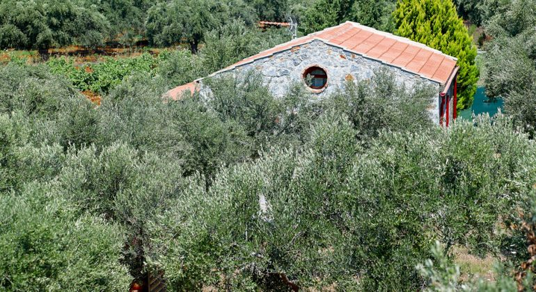 Villa set in olive groves offering complete privacy