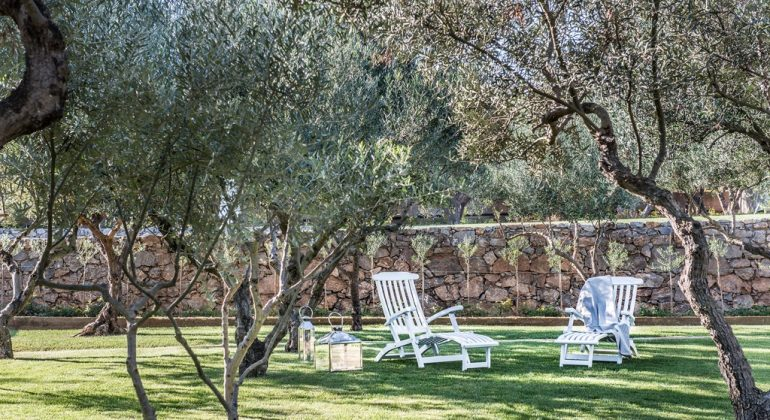 Relax in the olive grove